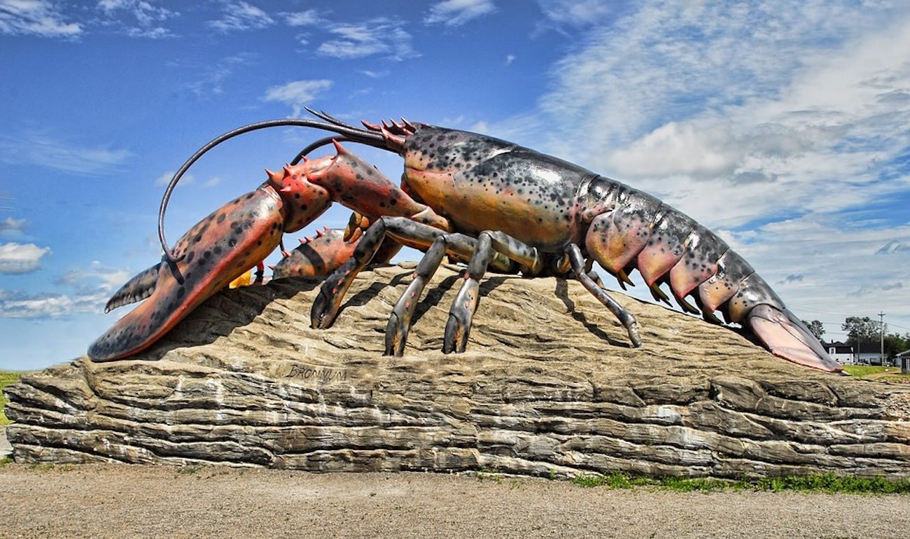 Lobster rules changes in Italy